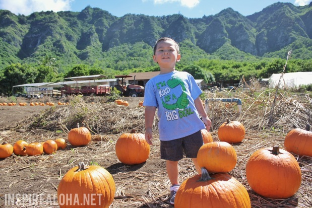 Pumpkin Picking -- Waimanalo Farms Pumpkin Patch --Inspirealoha.net