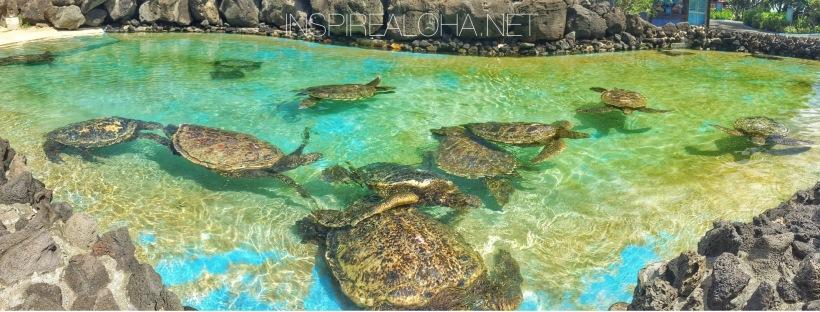 Island Life: Sea Life Park, Hawaii -- Inspirealoha.net